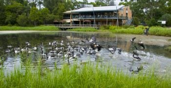Hunter-Wetlands-Centre